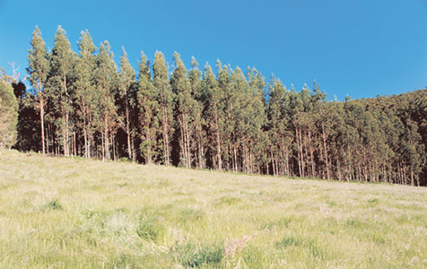 EPA gives tick to SW forestry plan