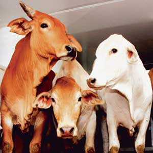 Strong growth in animal exports