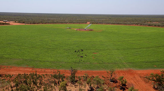 Boost for Kimberley agriculture