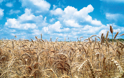 Grain industry plans to capitalise on dining boom