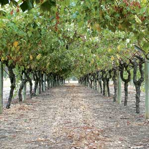 Highway plan worries winery
