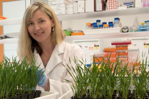 Curtin facility grows grain research