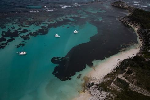 Rottnest attracts more visitors