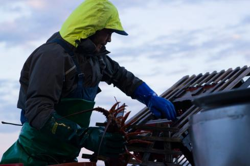 Kelly softens tone on lobster takeover