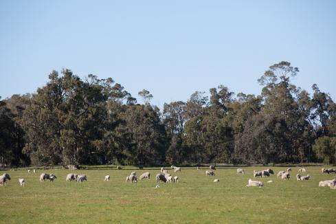 Regulatory changes to support WA sheep farmers
