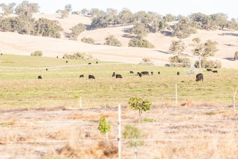 ACCC flags Landmark-Ruralco merger concern