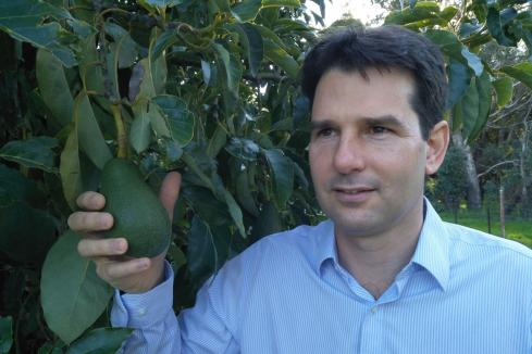 Alterra strengthens management to drive avocado play