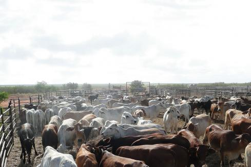 Agribusinesses beef up numbers