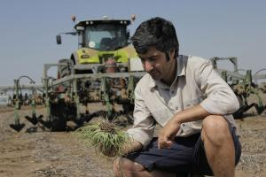 Weedchipper a non-chemical, sustainable cropping solution