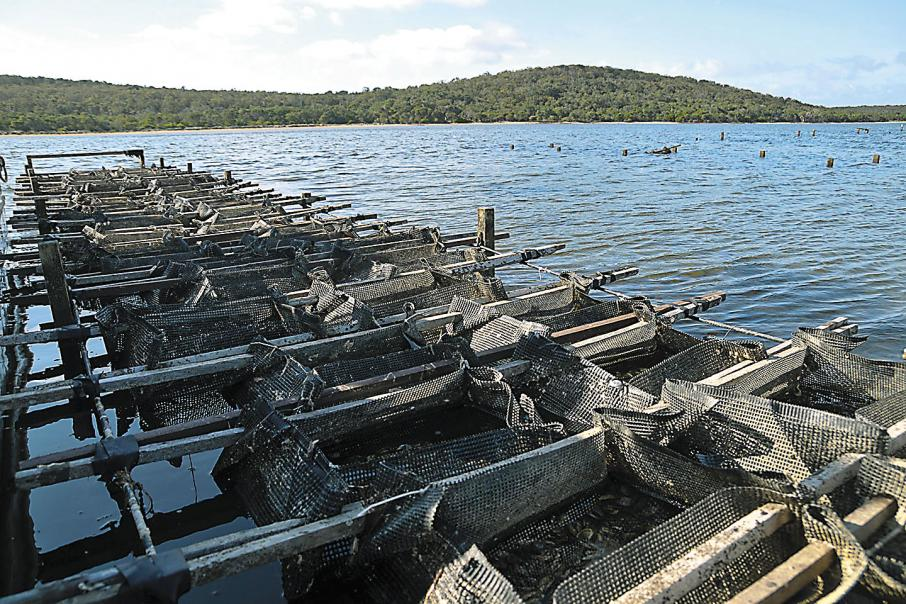 Opportunities to grow aquaculture industry