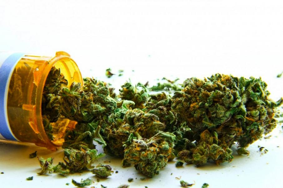 Marijuana to be trialled in epilepsy patients