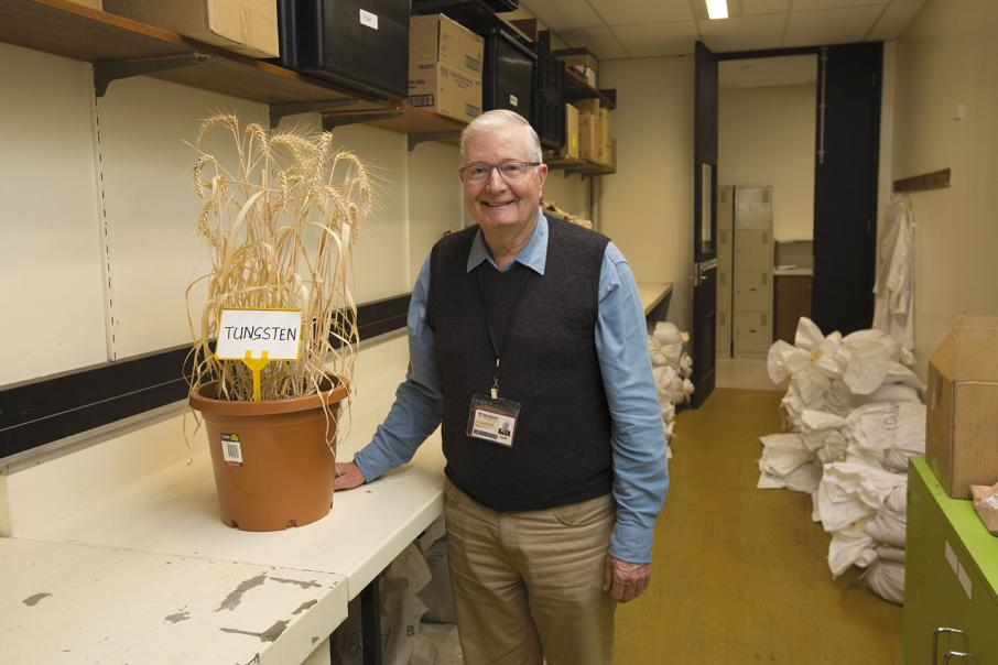 New wheat variety tipped  to boost competitive edge