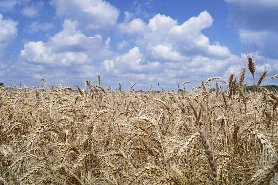 Govt buys Monsanto stake in WA grain breeder