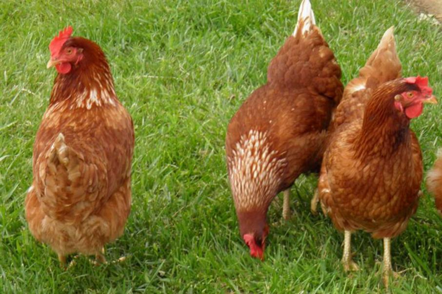 Ingham's in $70m WA poultry investment
