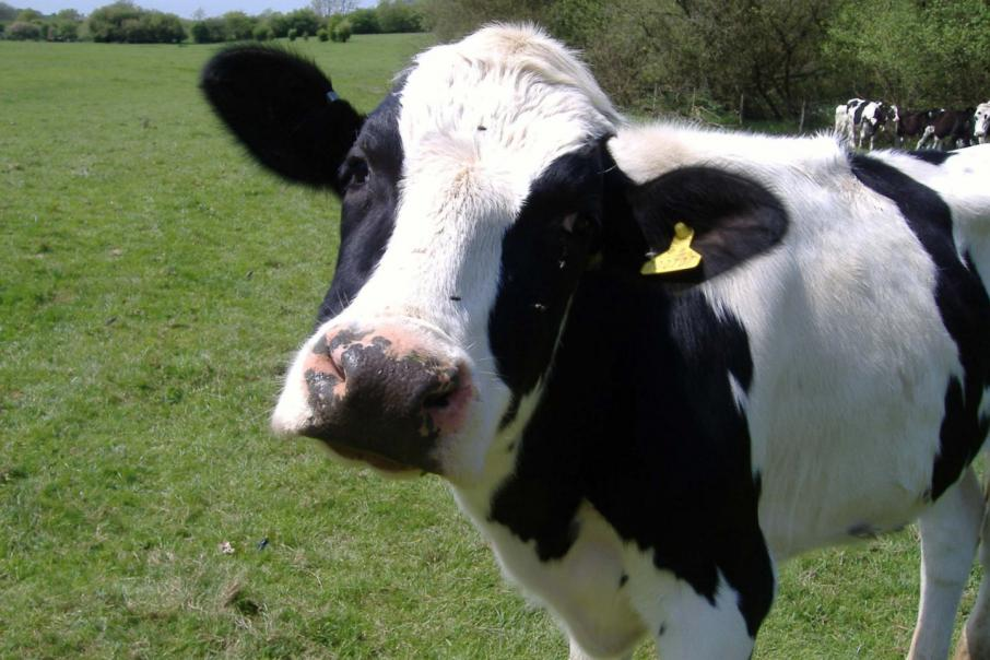 ACCC, milk producers at odds