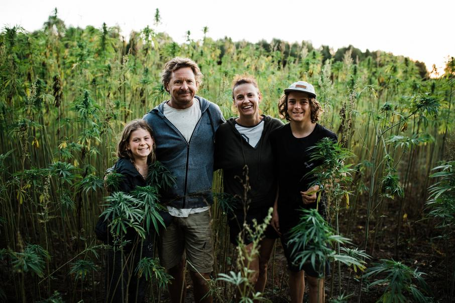 Versatile hemp plant offers growth potential