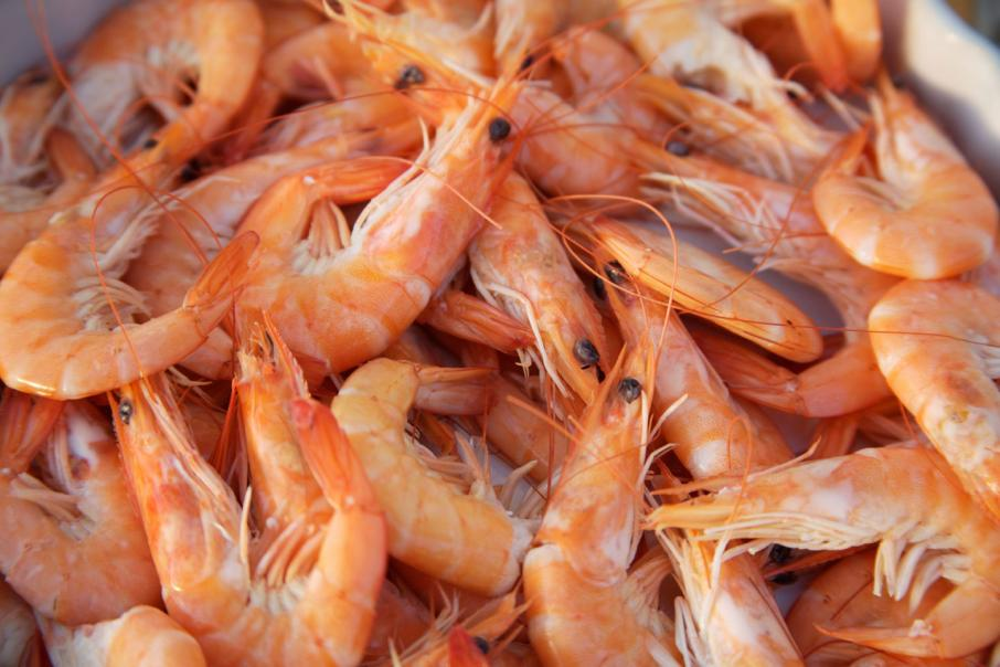 Seafarms raises more funds for prawn project