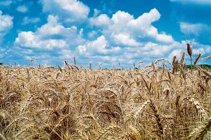 Grain harvest smashes 15 million tonnes